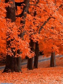 Отличная фотография осеннего парка для рабочего стола вашего Nokia 5130